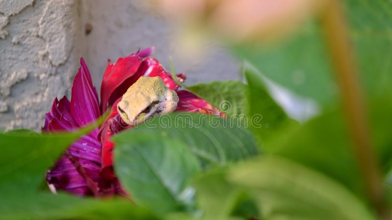 Frog Hiding In A Garden stock photography