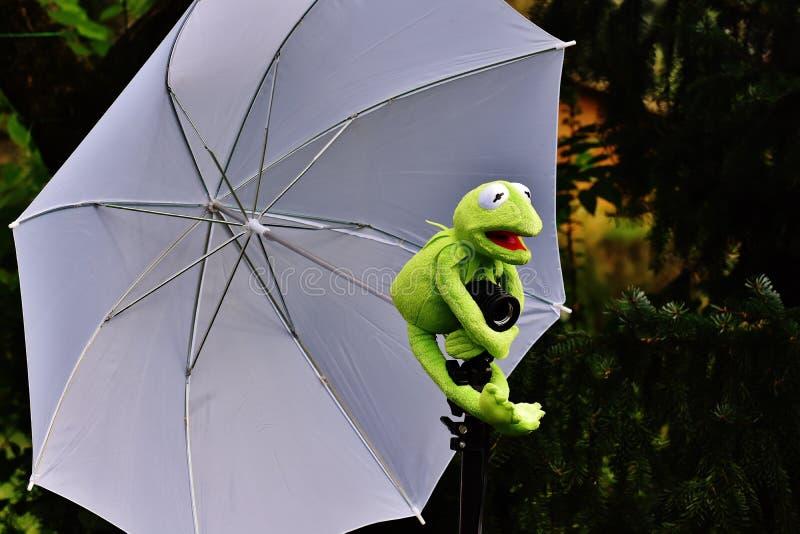 Frog holding an umbrella royalty free stock photos