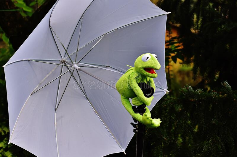 Frog holding an umbrella royalty free stock photos