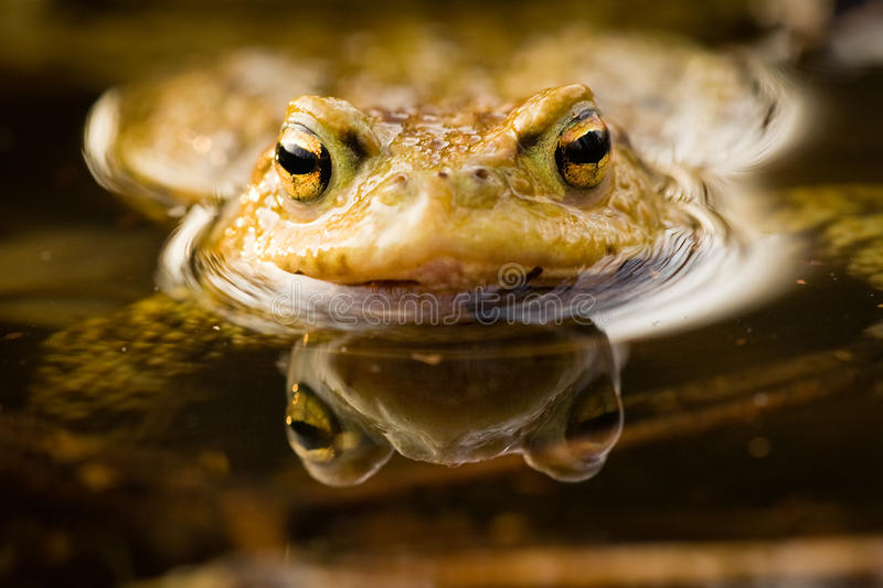 Frog. I love the frogs in the spring stock photos