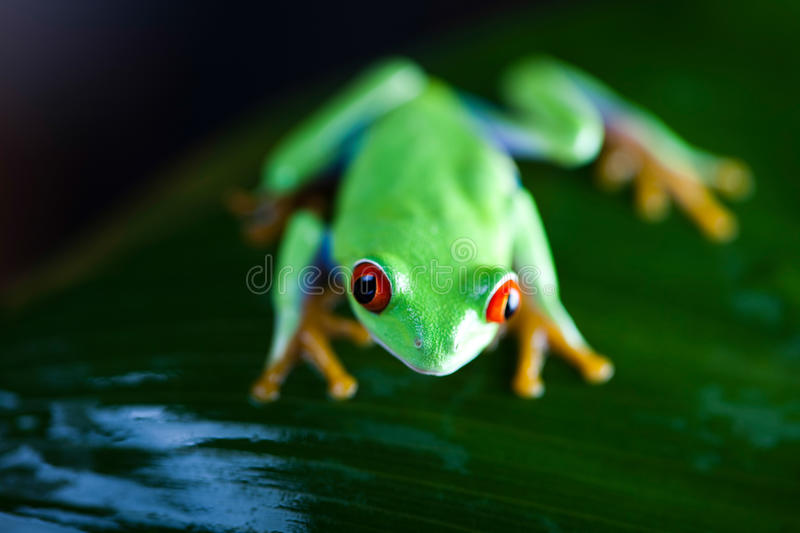 Frog in the jungle on colorful background.  stock photo