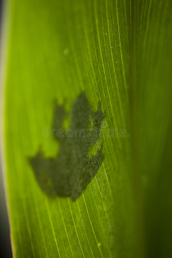 Frog on the leaf. Frog shadow on the leaf on colorful background royalty free stock photo