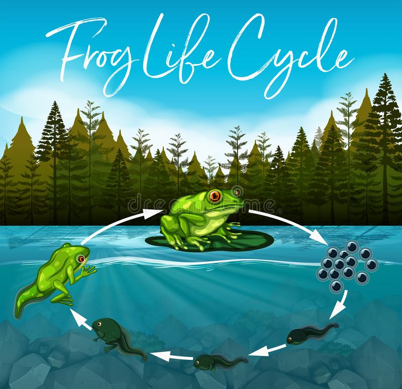 Frog life cycle concept vector illustration