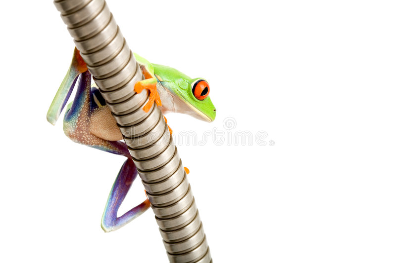 Frog on metal tube isolated royalty free stock image