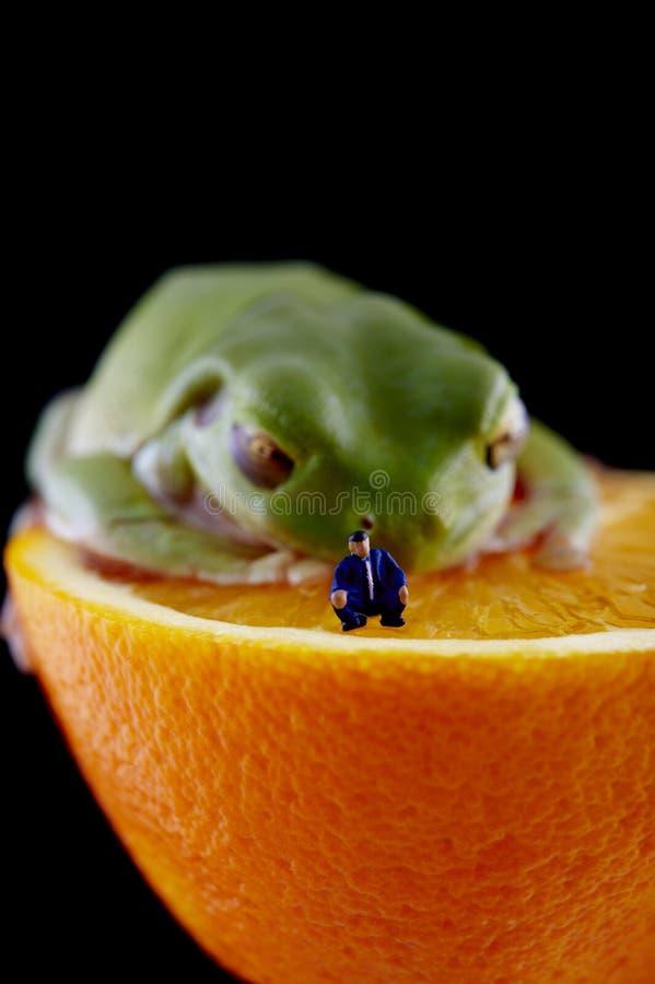 Frog and miniature man stock photos
