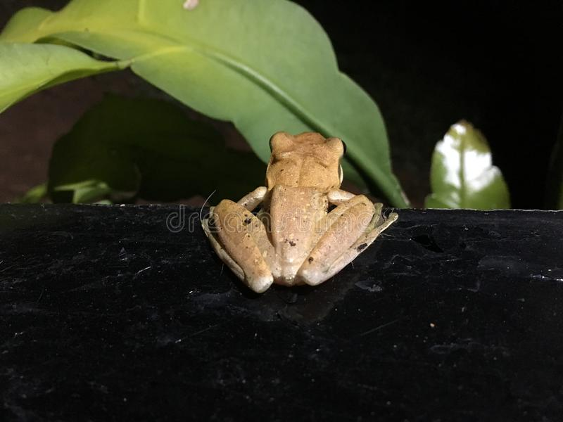 Frog. On mission... hunt begins stock photos