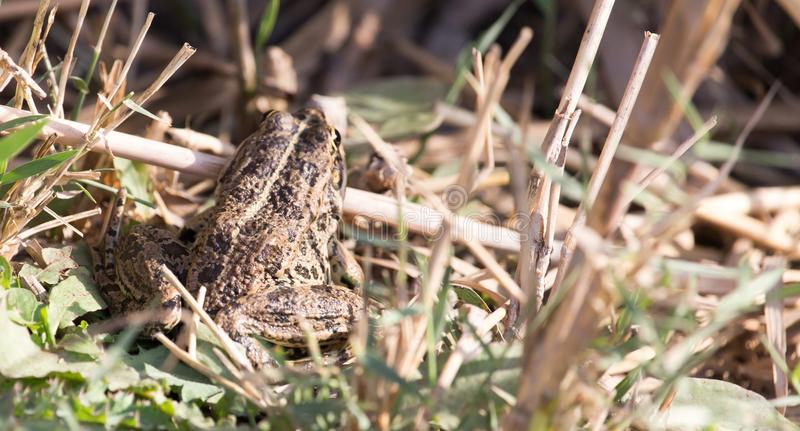 Frog on nature stock photography
