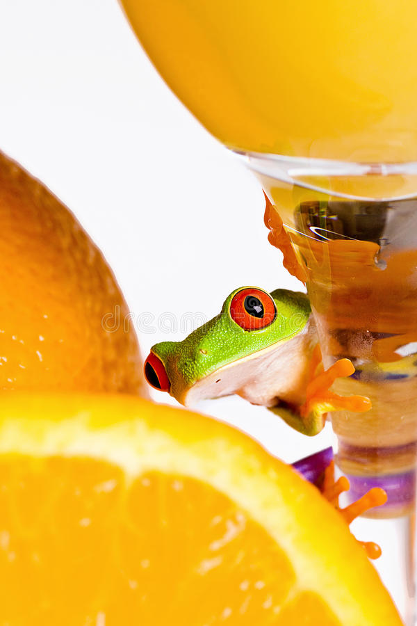 Frog and Orange Juice royalty free stock photography