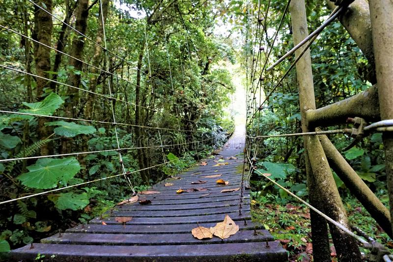 Frog perspective bridge through Juan Castro Blanco National Park. Costa Rica stock images