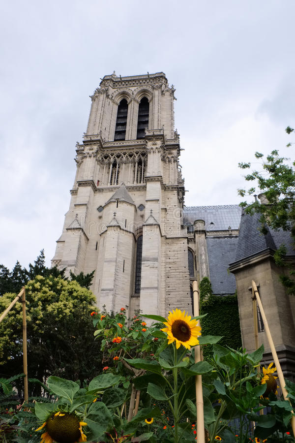 Frog perspective of Notre Dame. Looking at one of the Notre Dame towers and a surrounding garden with sun flowers, in frog perspective stock photos