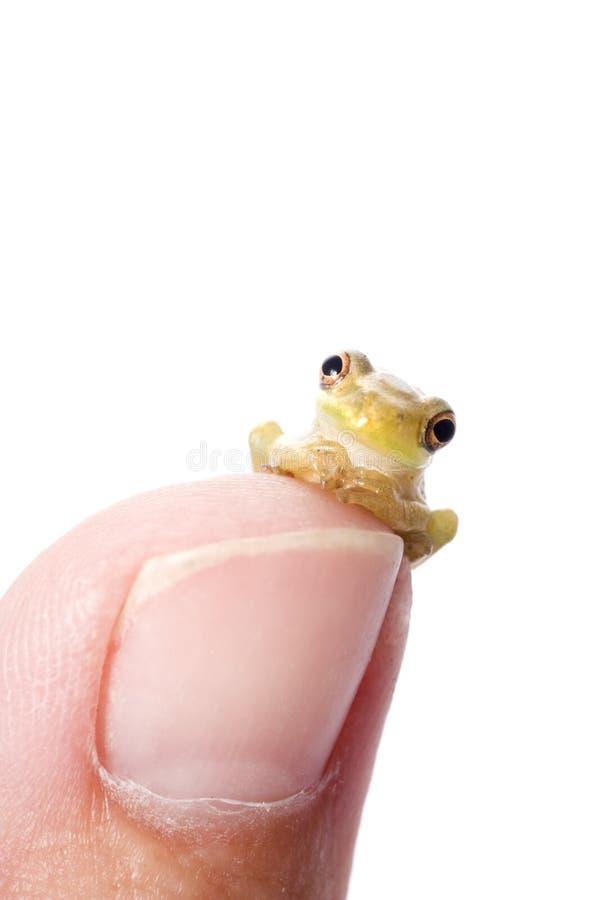 Frog Plotting World Domination royalty free stock photo