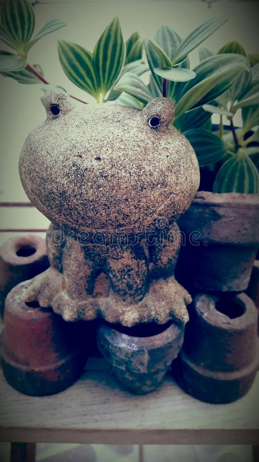 Frog and pots in the garden royalty free stock photo