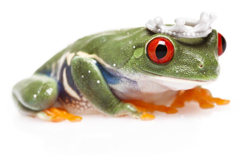 Download Frog Prince stock image. Image of green, closeup, cute - 12531029