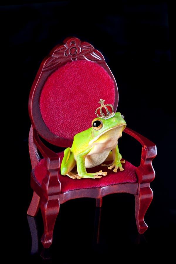 Frog prince on throne stock photography