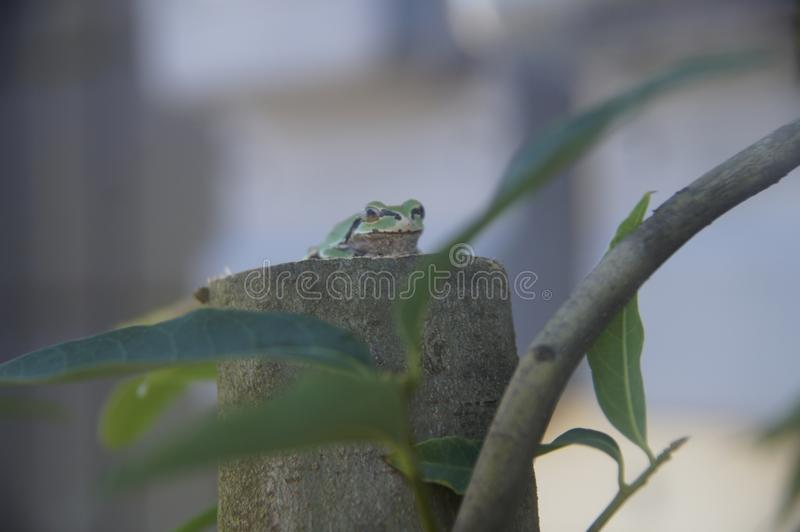 Frog sitting on a tree stock images