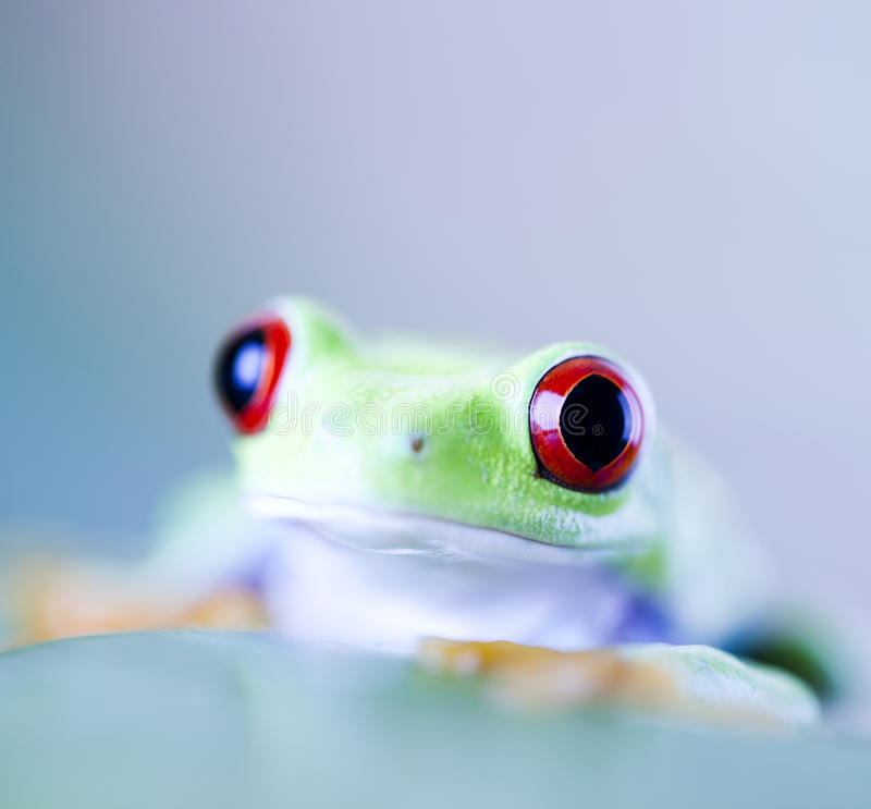 Frog. Shadow on the leaf on colorful background royalty free stock photos