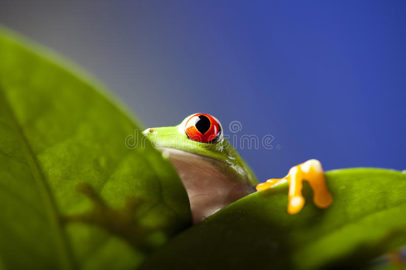 Frog shadow on the leaf. Exotic frog on colorful background stock images