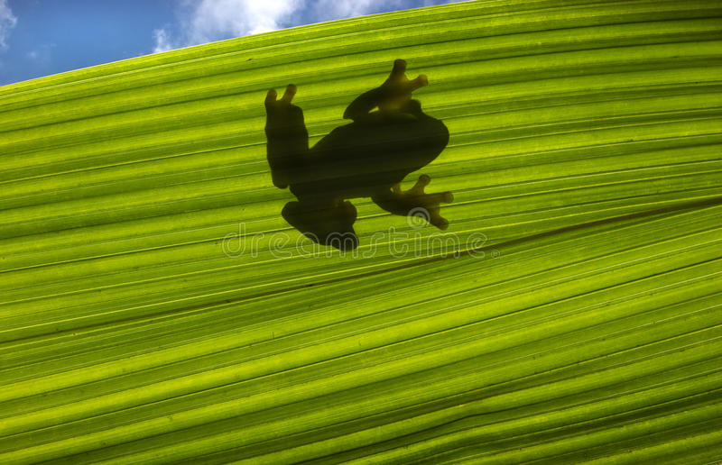 Frog silhouette royalty free stock photography