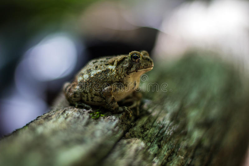 Frog sitting on a log royalty free stock photos