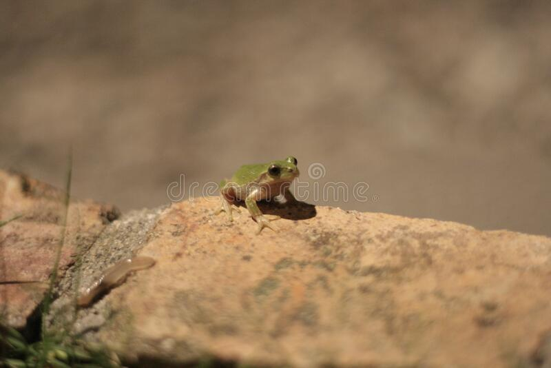 Frog Sitting On Rock Free Public Domain Cc0 Image