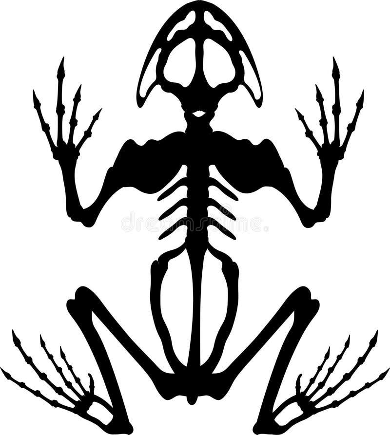 frog skeleton 2 stock illustration illustration of bones 1024795 rh dreamstime com Leaping Frog Clip Art Frog Prince