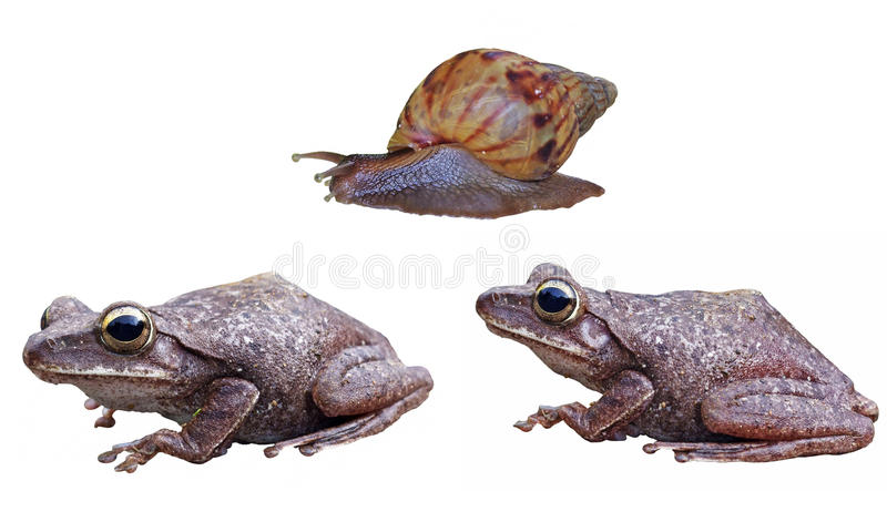 Frog and snail isolation. On white background royalty free stock photo