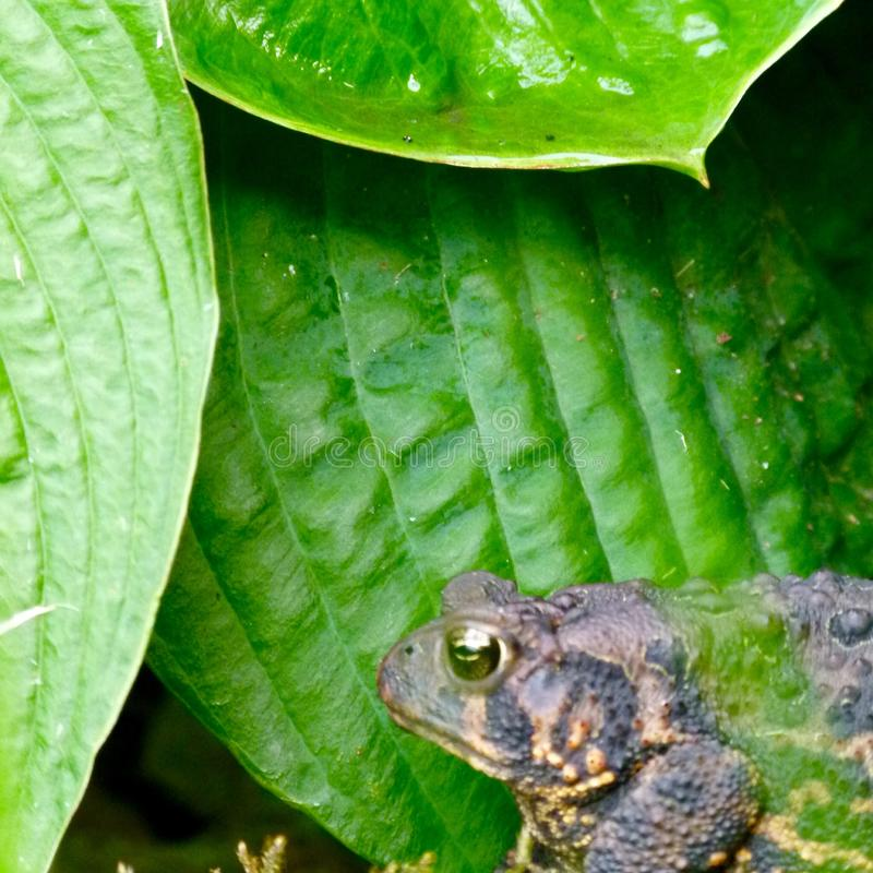 Frog in summer royalty free stock photography
