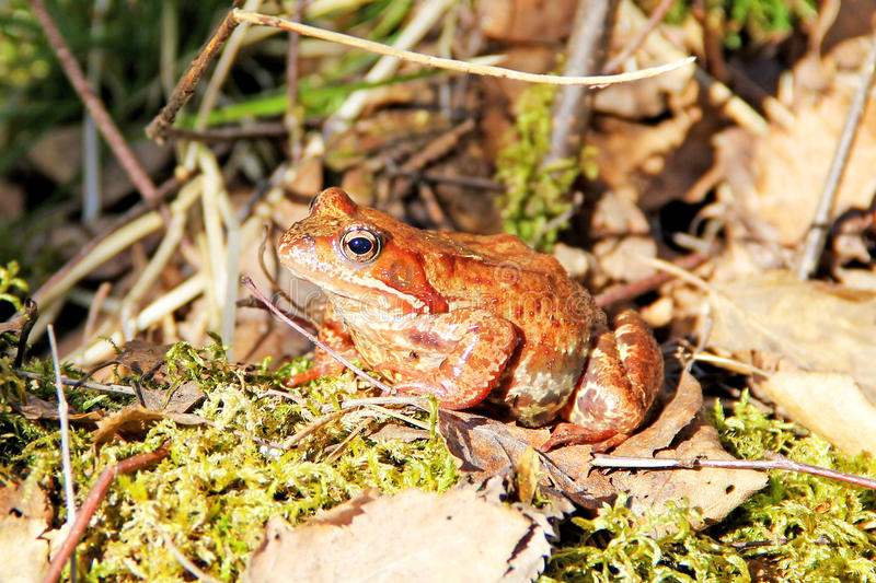 Frog in the sun royalty free stock photography