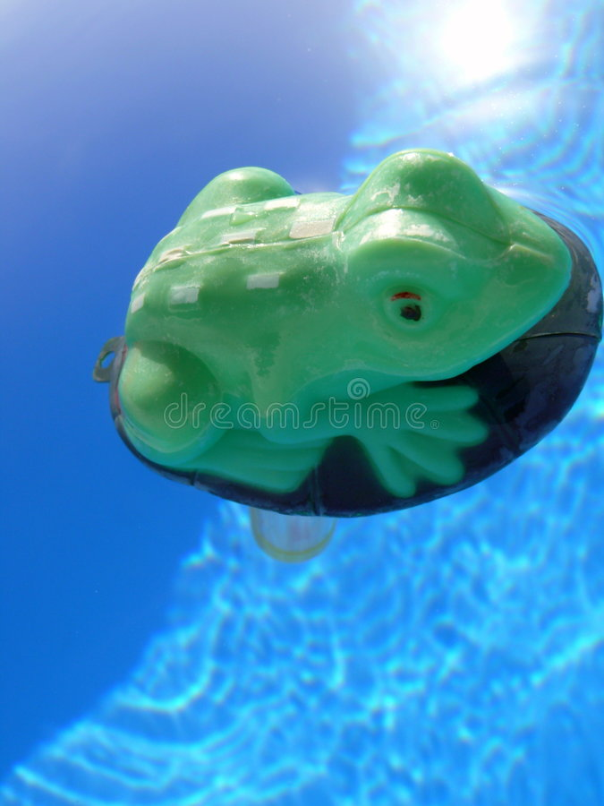 Frog and swimming pool stock photo