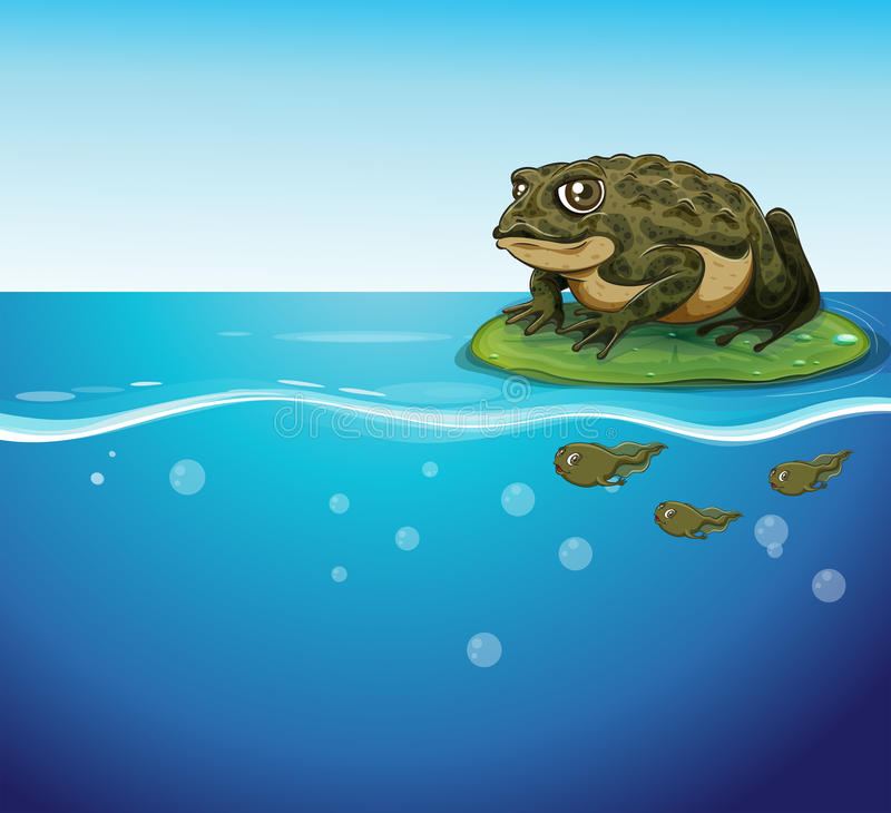 Frog and tadpoles royalty free illustration