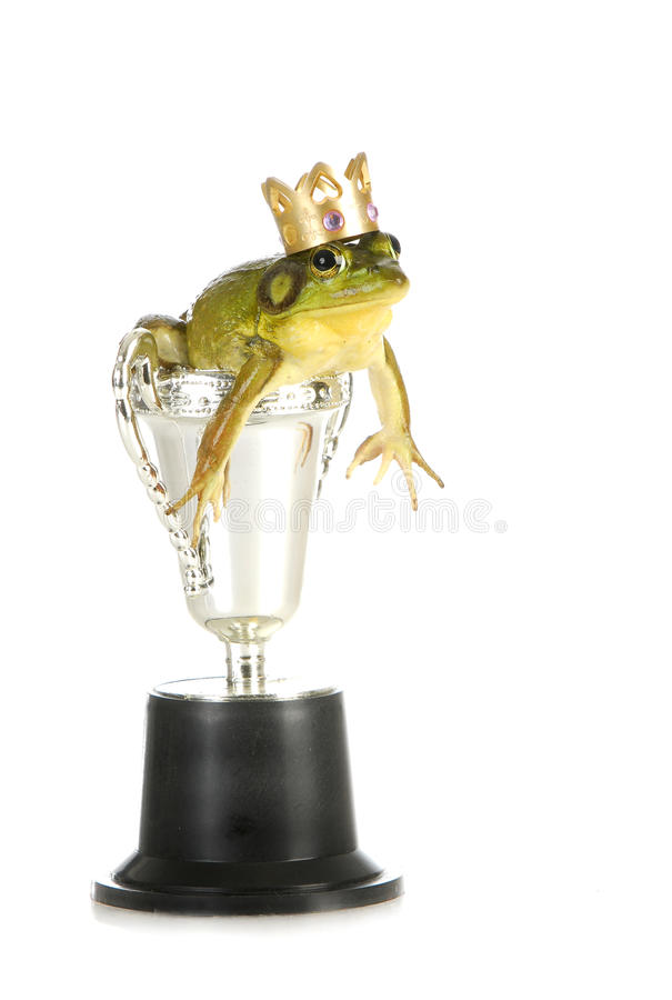 Download Frog in a trophy stock image. Image of amphibian, animal - 26595901