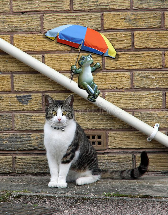Frog with umbrella parasol sliding down drainpipe and cat posing portrait. Surreal photo concept of a frog with parasol umbrella sliding down a drainpipe behind vector illustration