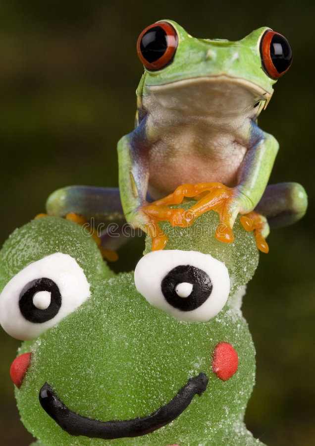 Free Frog Vs. Frog Stock Photo - 1890550