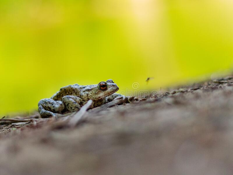 Frog waiting for the right time to catch stock photo