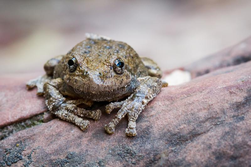 Frog in Zion stock images