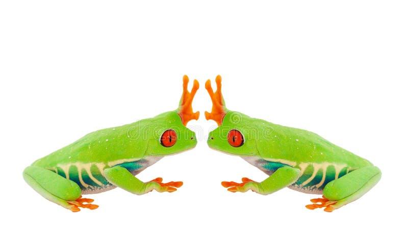 Froggie hauts cinq images stock