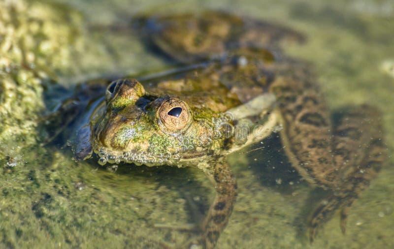 Froggy fotografering för bildbyråer