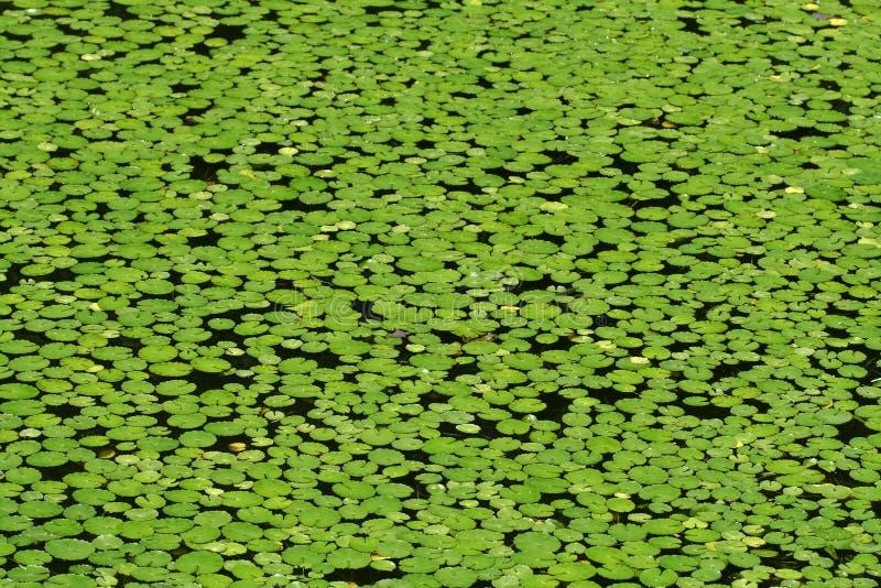 Froggy di Whereâs? fotografia stock