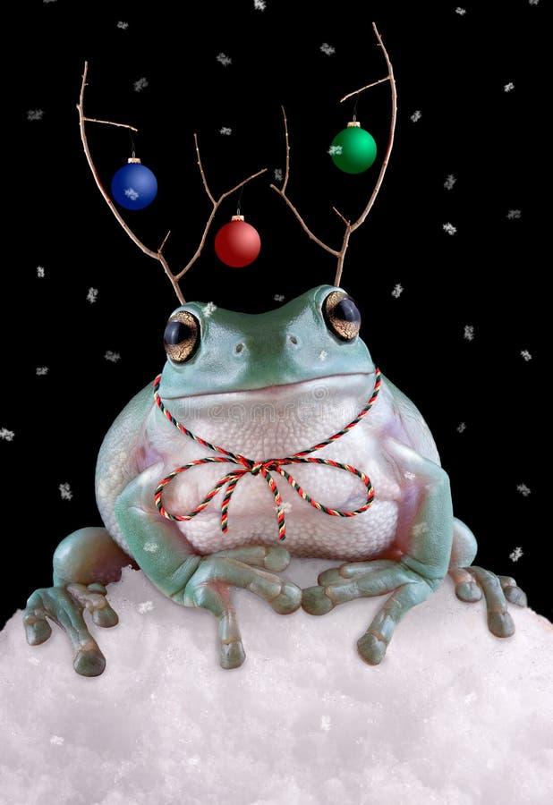 Froggy Reindeer stock image
