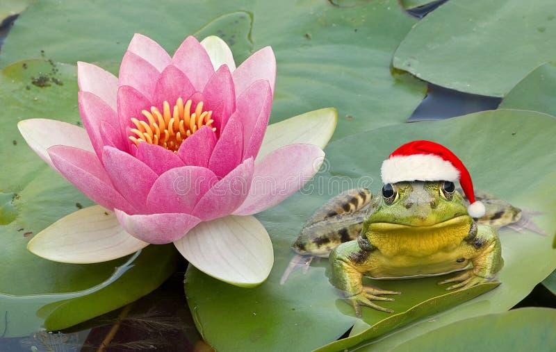 Froggy Santa image stock
