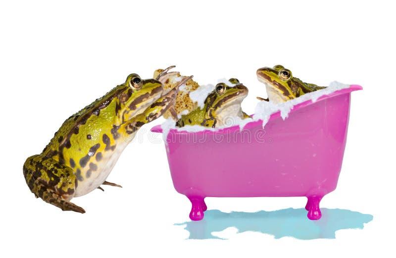 Frogs enjoying a bubble bath stock photos