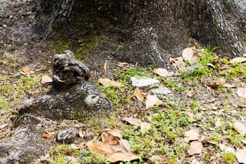 Frogy drzewa korzeń zdjęcie royalty free