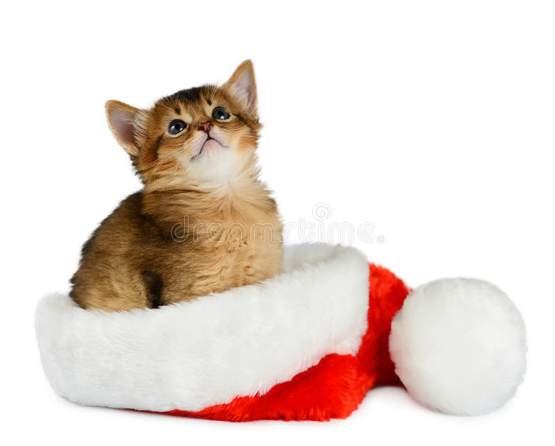 frohe weihnacht katze mit sankt hut auf wei stockbild. Black Bedroom Furniture Sets. Home Design Ideas