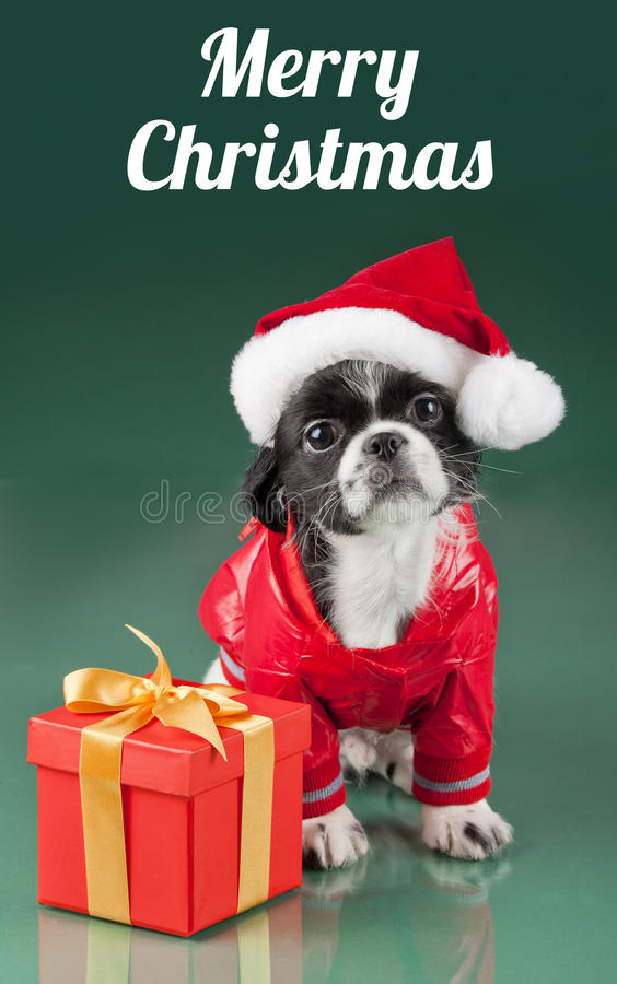 frohe weihnachten santa claus hund stockbild bild. Black Bedroom Furniture Sets. Home Design Ideas