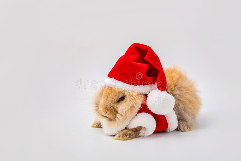 Frohe Weihnachten und frohe Feiertage Kaninchen, das Santa Cross-Kleid trägt Gl?cklicher Ostern-Tag Brown-Kaninchen auf wei?em Hi lizenzfreie stockbilder
