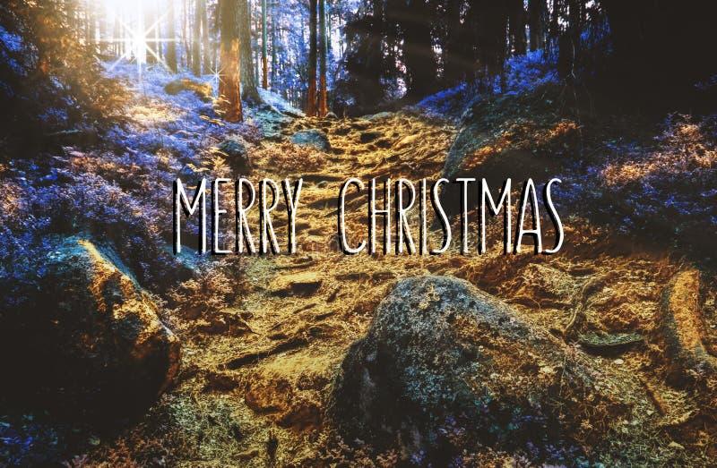 Frohe Weihnachten in verzaubertem goldenem Wald stockbilder