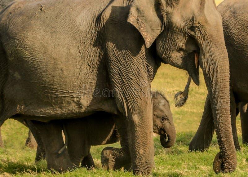 Frohes Elefantkind geschützt von der Mutter lizenzfreie stockfotos