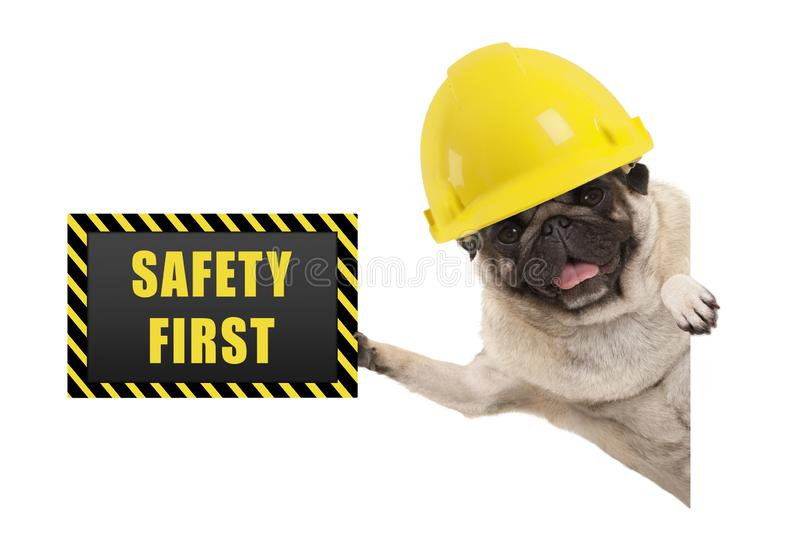 Frolic smiling pug puppy dog with yellow constructor helmet, holding up black and yellow safety first sign board royalty free stock image