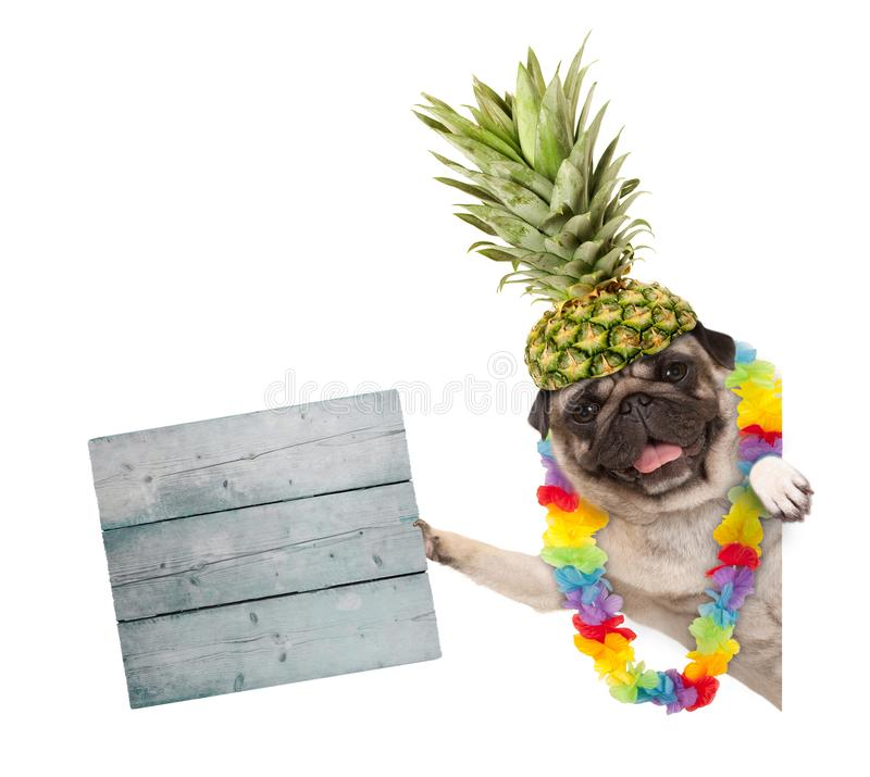 Frolic summer pug dog with hawaiian flower garland and pineapple hat, holding wooden sign, isolated on white background stock photography