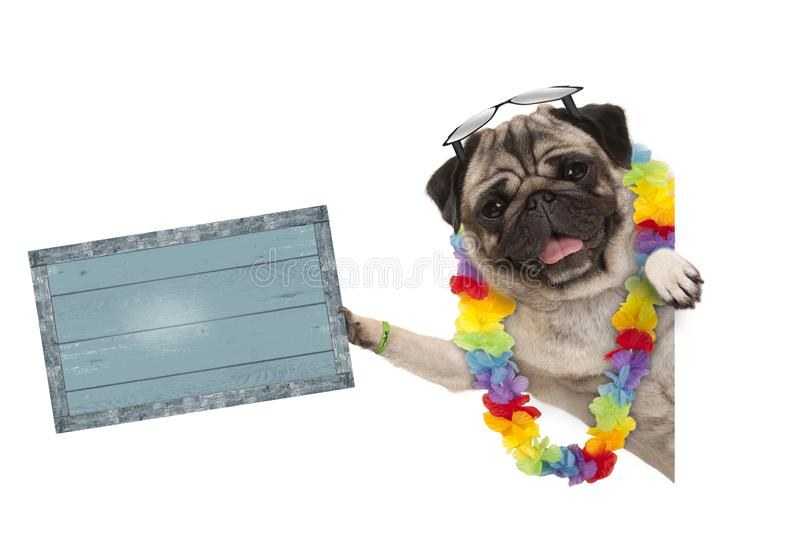 Frolic summer pug dog with hawaiian flower garland and sunglasses, holding up blue vintage wooden board stock images